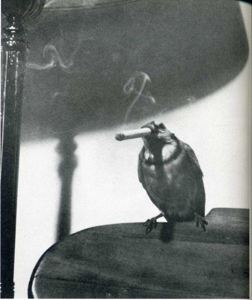 humour-drole-photo-life-magazine-96