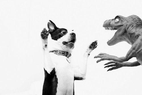 dog afraid toy