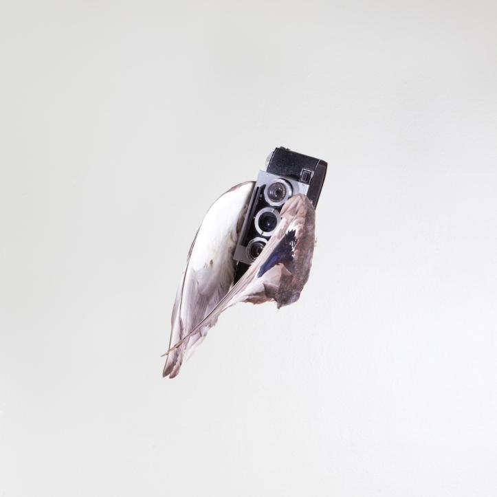 birds of aperture-11