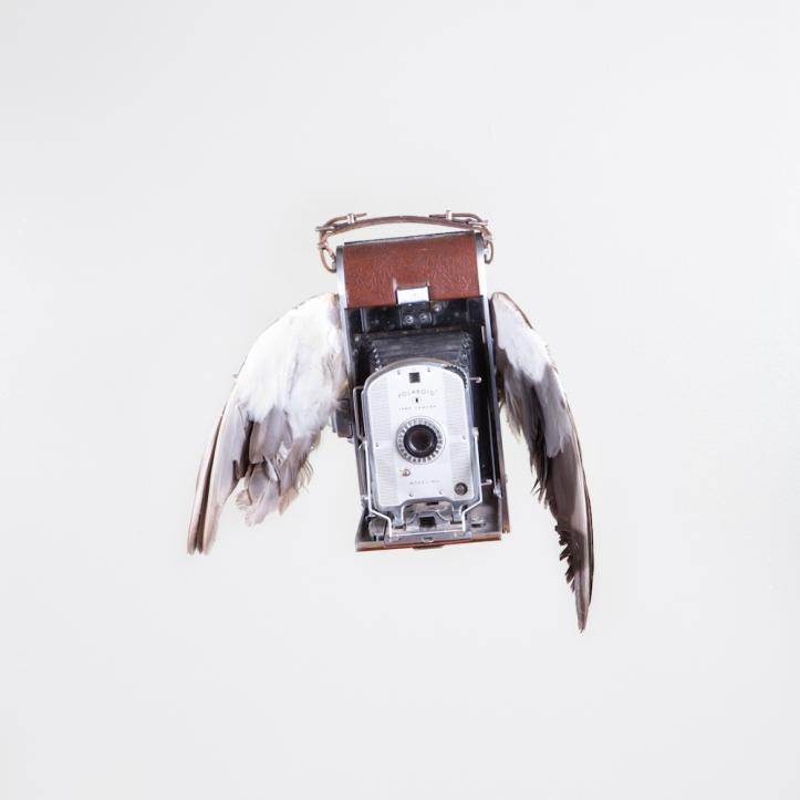birds of aperture-2