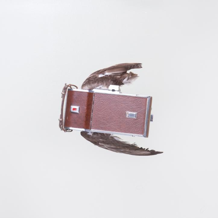 birds of aperture-3