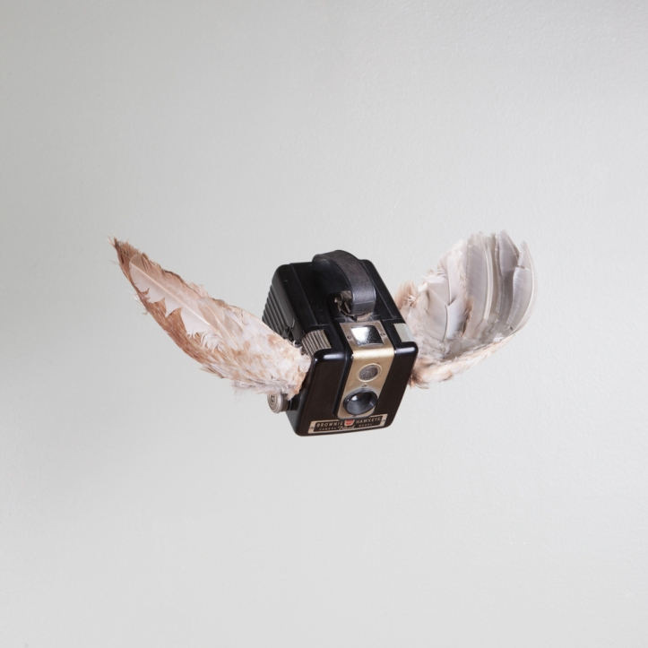 birds of aperture-5