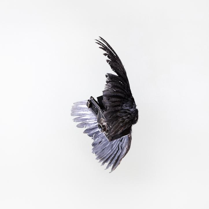 birds of aperture-6
