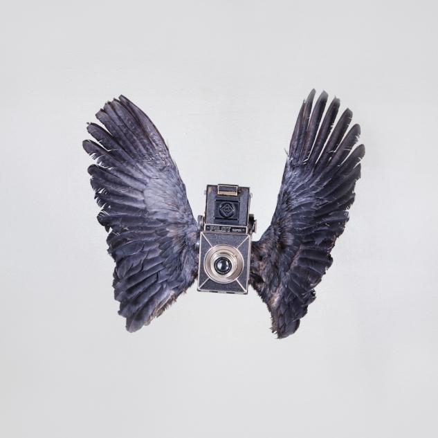 birds of aperture-7