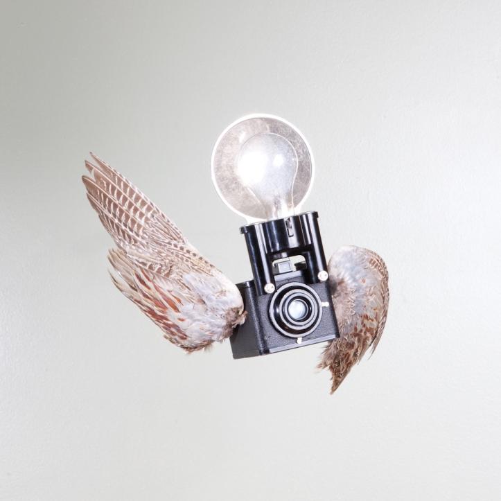 birds of aperture-8