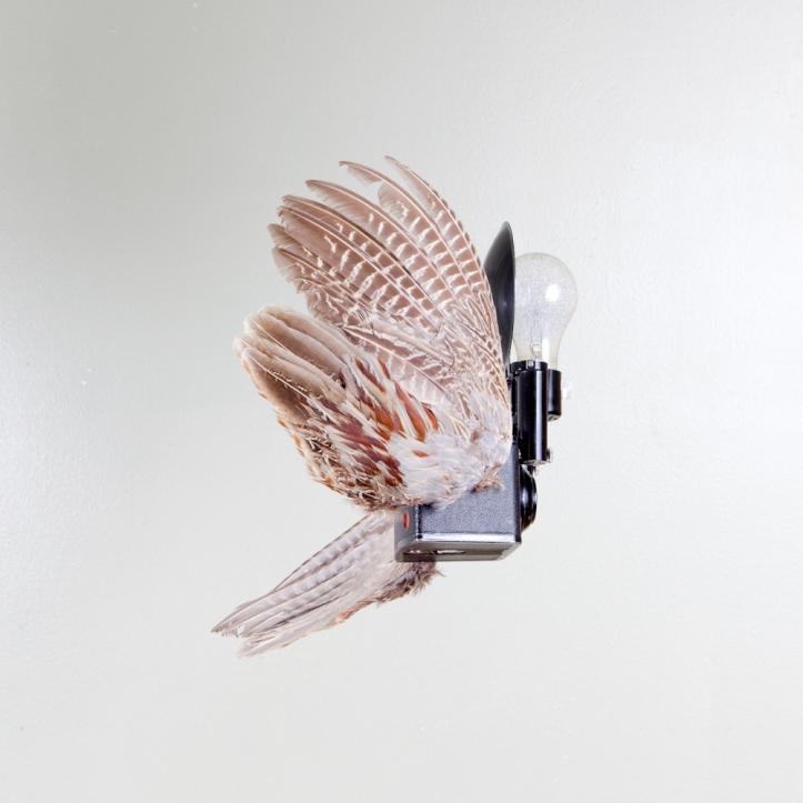 birds of aperture-9