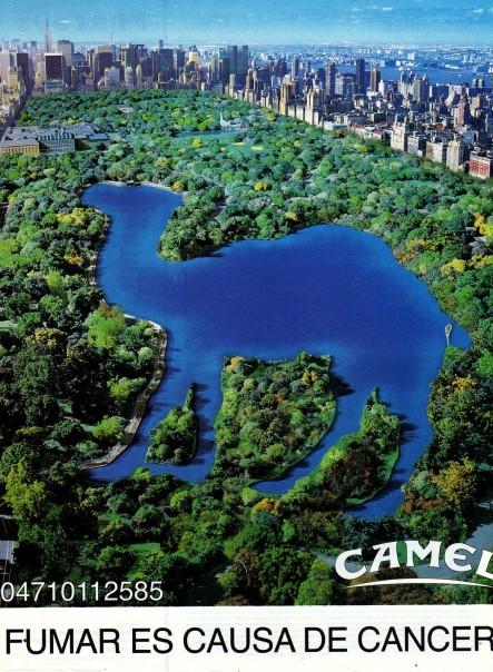 Creative-Camel7