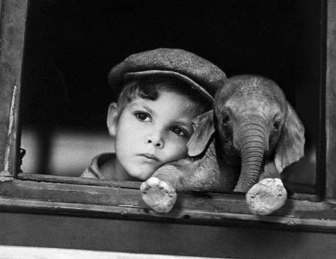 kid and his elephant cub