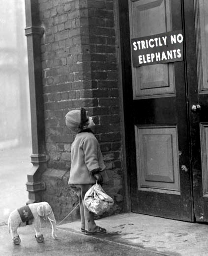 strictly forbidden to elephant