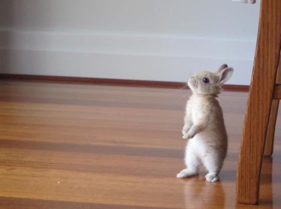 tbaby rabbit