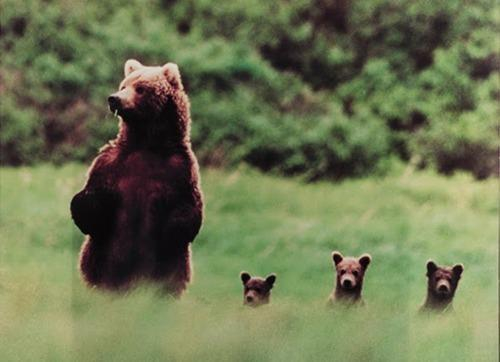 Bears cute familly