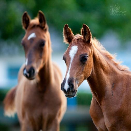 poney2