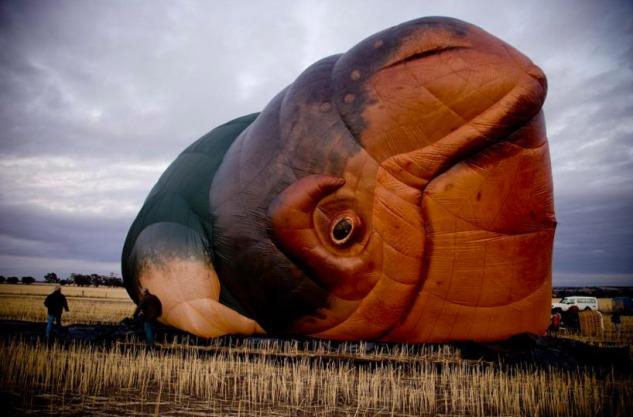 sky-whale-patricia-piccinini-14